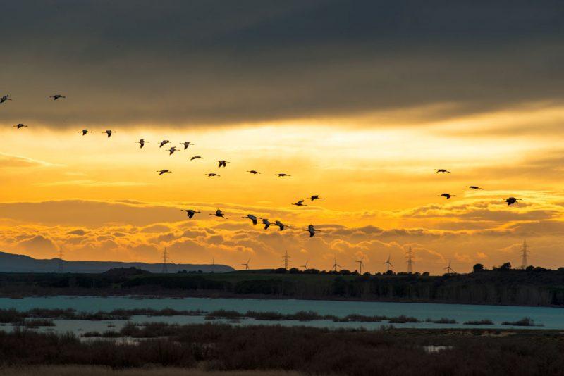 La Sotonera. La Alberca de Alboré: humedales y aves migratorias